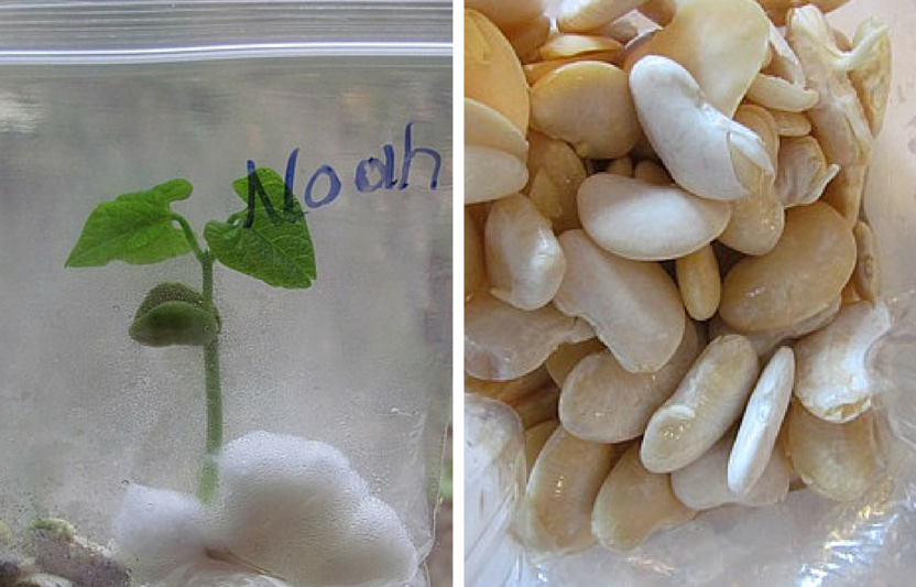 6 Crops for Kids to Plant (and Eat!)