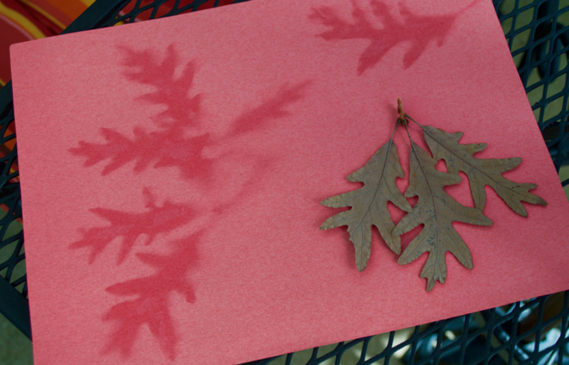 Harness the power of the sun to make these artistic leaf prints!